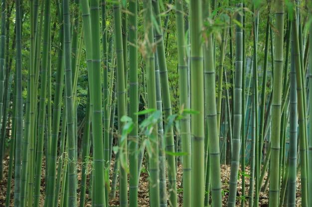 Groene bamboe textuur achtergrond