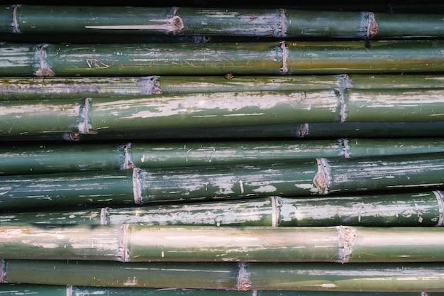 Groene bamboe