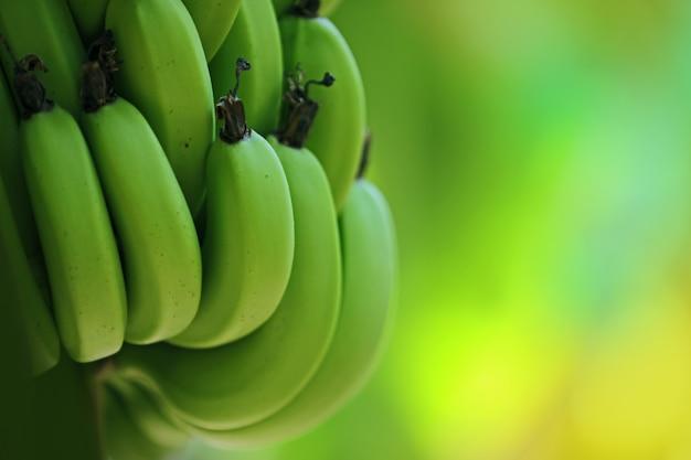 Groene banaan
