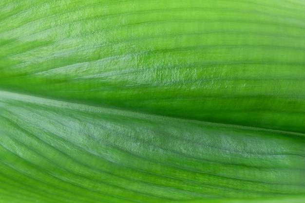 Groene blad achtergrond bovenaanzicht