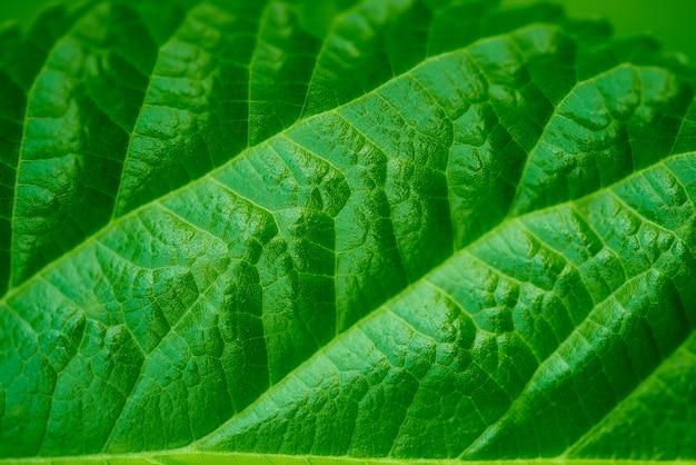 Groene blad close-up achtergrond.