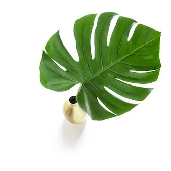 Groene blad exotische tropische bloem monstera
