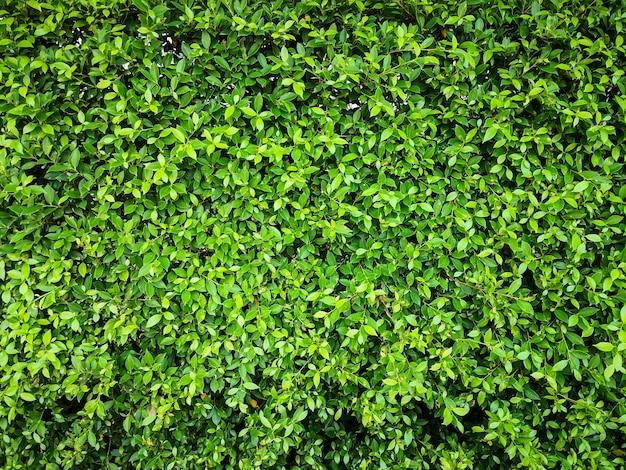 Groene blad muur textuur achtergrond milieu versheid behang concept