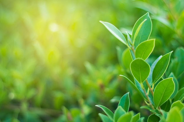 Groene blad natuurlijke achtergrond voor textuur