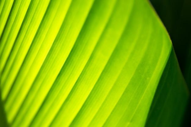 Groene blad textuur achtergrond met zonlicht