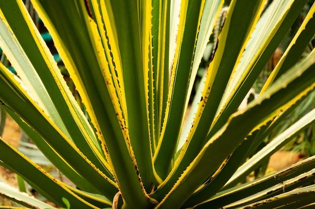 Groene blad textuur. blad textuur achtergrond. natuurlijke achtergrond en behang.