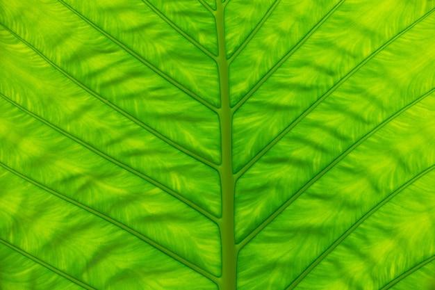 Groene blad textuur van een plant close-up