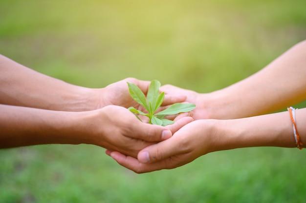 Groene blad zaailingen zetten de handen van mannen