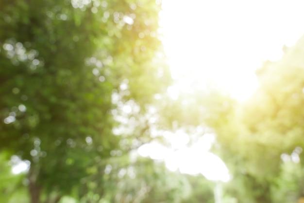 Groene bladachtergrond. wazig bladeren. samenvatting van mooie bladeren.