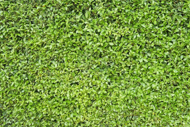 Groene bladachtergrond.