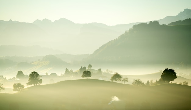 Groene bladbomen op veld overdag met mist