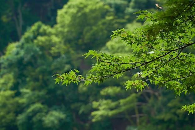 Groene bladeren aan de boom aan de hemel