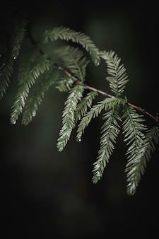 Groene bladeren aan een tak