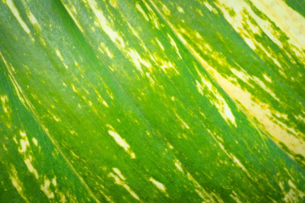Groene bladeren aard achtergrond