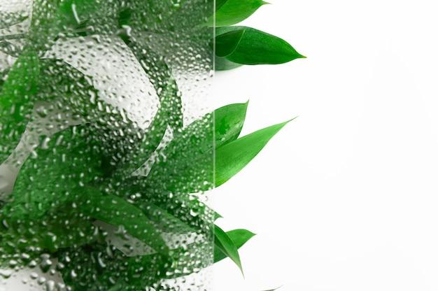 Groene bladeren achter nat glas