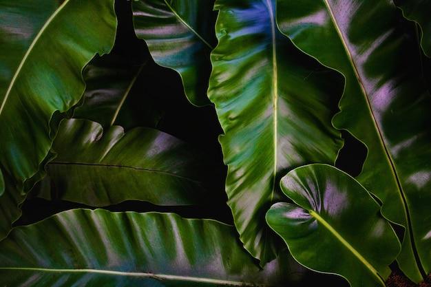 Groene bladeren achtergrond. groene bladeren kleurtint donker in de ochtend.