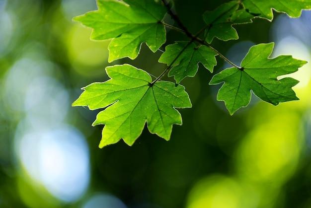Groene bladeren achtergrond in een zonnige dag