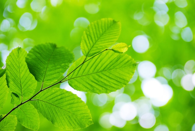 Groene bladeren achtergrond in zonnige dag