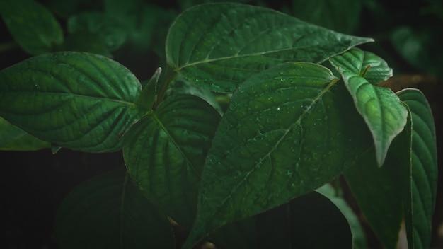 Groene bladeren achtergrond natuur in donkere toon Premium Foto