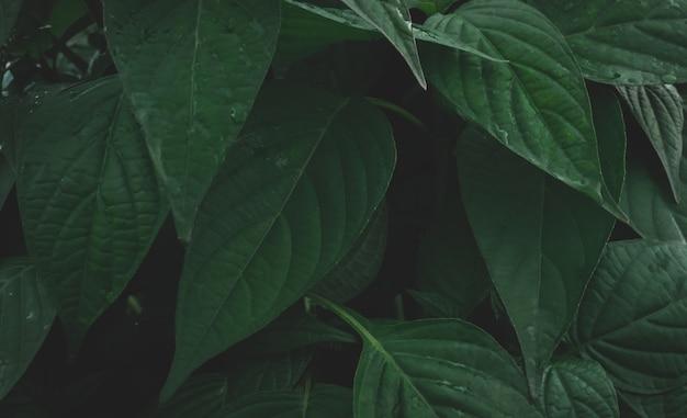 Groene bladeren achtergrond natuur in donkere toon