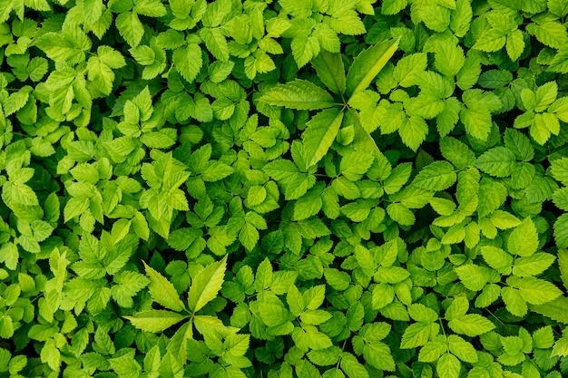 Groene bladeren achtergrond. natuur textuur.