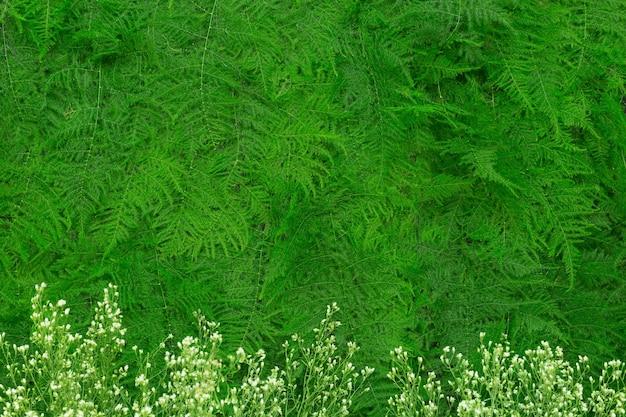 Groene bladeren achtergrond of groene achtergrond