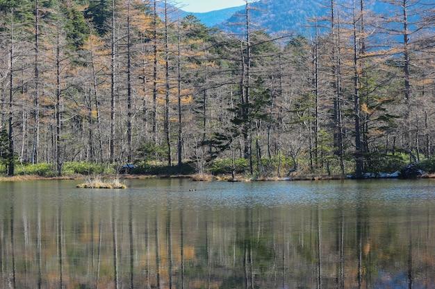 Groene bladeren boom bos met reflectie op myojin vijver op de japanse alpen.