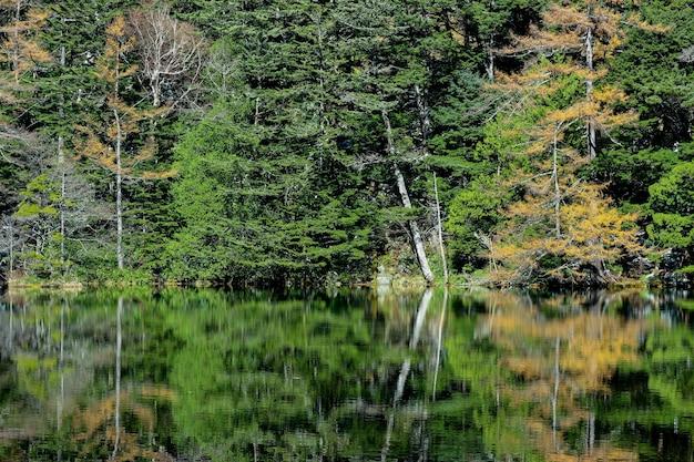 Groene bladeren boom bos met reflectie op myojin vijver op japanse alp.