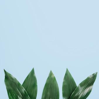 Groene bladeren die op blauwe achtergrond worden geschikt