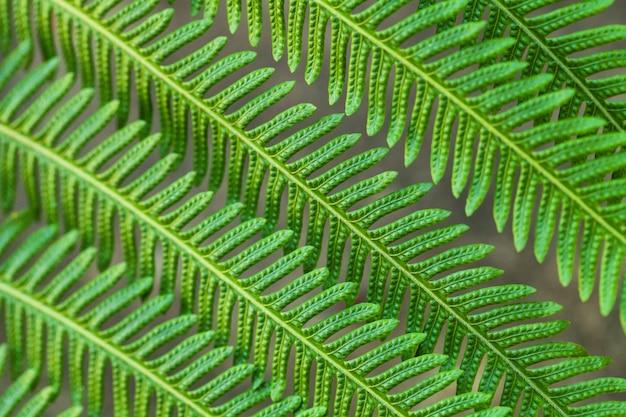 Groene bladeren die van de installatie, de close-up van spartakken imiteren.
