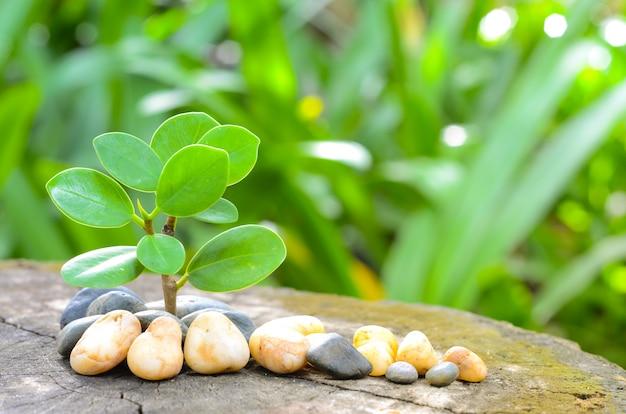 Groene bladeren en kiezelstenen