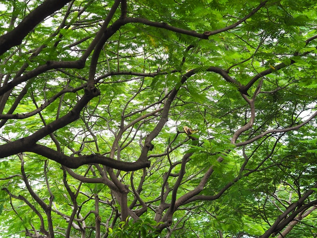 Groene bladeren en takken van grote boom in het park.