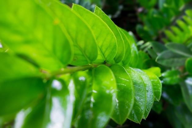 Groene bladeren gerangschikt in rijen. de schoonheid van het tropische bosconcept.