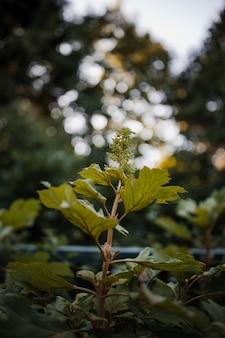 Groene bladeren in de lens van de schuine standverschuiving