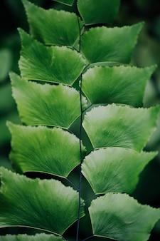 Groene bladeren in de natuur