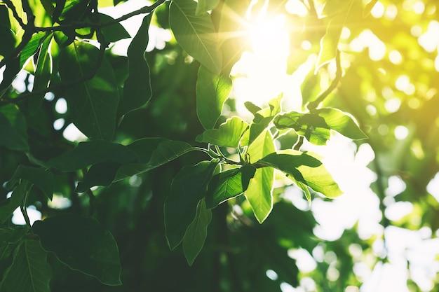 Groene bladeren in het zonlicht op een zonnige dag in een bos. natuur in de dolomieten, italië, europa. afbeelding van ochtend, zen-achtige, natuurlijke ontspannende achtergrond.