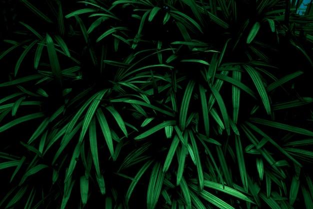Groene bladeren kleurtint donker in de ochtend. omgeving, foto concept aard en plant.