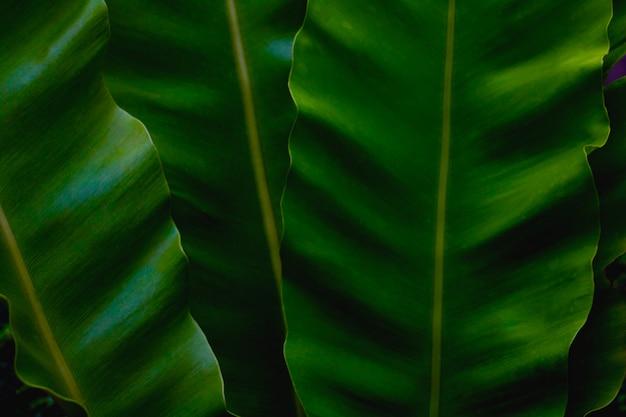 Groene bladeren kleurtint donker in de ochtend