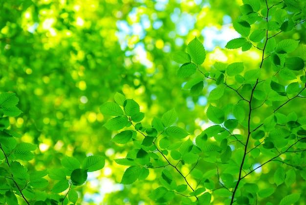 Groene bladeren komen aan de oppervlakte in zonnige dag