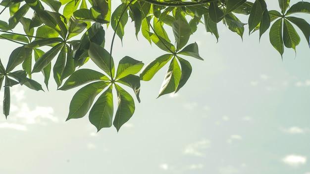 Groene bladeren met hemelachtergrond in daglicht