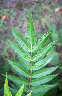 Groene bladeren met regendruppels. mooie groene natuurlijke onscherpe achtergrond met kopie ruimte. close-up shot met selectieve focus op bladeren bedekt met dauwdruppels.