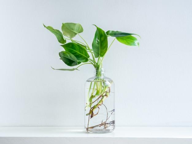 Groene bladeren met water in transparante plastic fles.