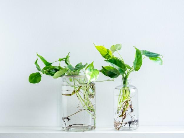 Groene bladeren met water in transparante plastic flessen.