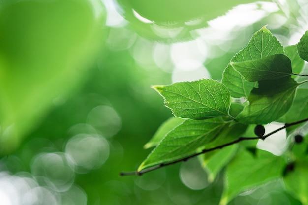 Groene bladeren met zonlicht, zomer lente gebladerte bokeh