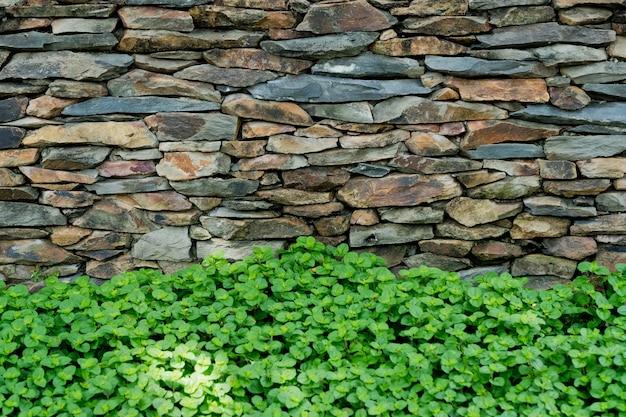 Groene bladeren muur achtergrond, blad muur natuur achtergrond,