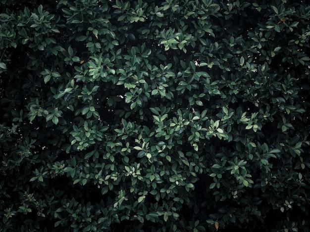 Groene bladeren muur textuur afbeelding
