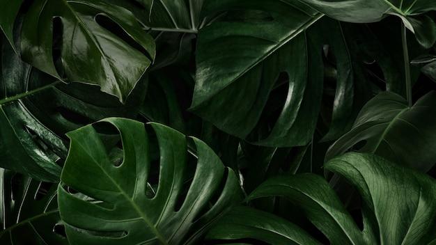 Groene bladeren natuur achtergrond behang