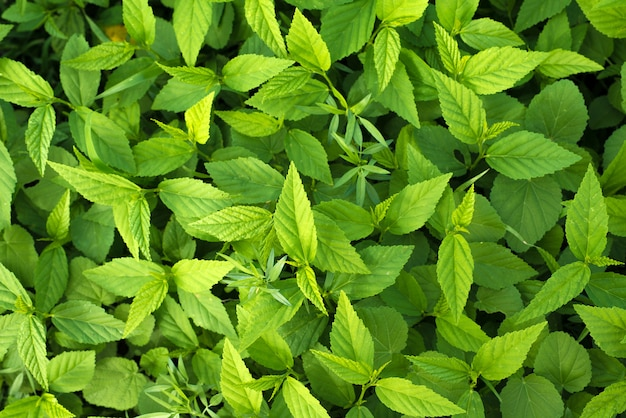 Groene bladeren natuur