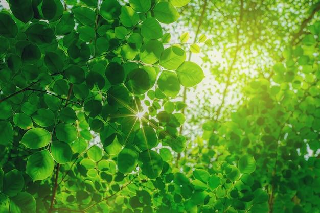 Groene bladeren onder de boom met zonlicht op de top lage hoek bekijken geselecteerde focus