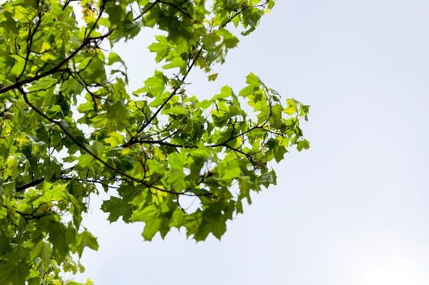 Groene bladeren op boom